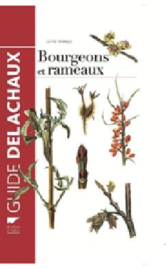 arboriculture - Bourgeons et rameaux